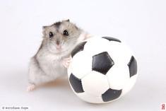 ВК решил показывать ЧМ по футболу