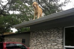 Зависающий на крыше пес очаровал соцсети