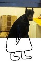 В сети посочувствовали грустному псу-консьержу из российского подъезда