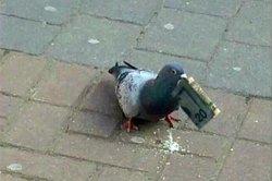 В сети возненавидели внезапно разбогатевшего голубя