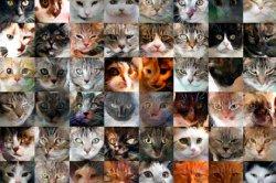Искусственный интеллект изуродовал тысячи снимков котов