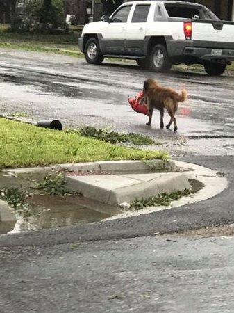 Пес запасся кормом после урагана в Техасе и восхитил соцсети