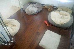 «Испорченный» пес отверг пять лежанок и рассмешил пользователей сети