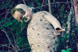 Осы превратили обрубки детской куклы в гигантское гнездо и напугали соцсети
