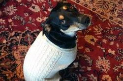 Пес научился изображать кашель ради внимания хозяев
