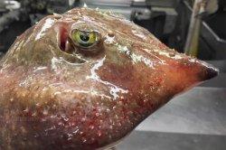 Снимки страшных морских тварей от российского моряка дошли до западных СМИ