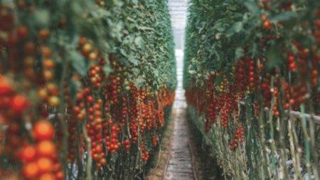 Майнеры вырастили урожай «криптоматов»