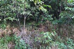 Ловко спрятавшаяся змея в траве поставила пользователей сети в тупик