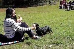 Девушка доела мороженое за собакой и спровоцировала спор в сети
