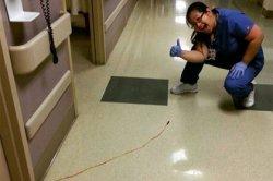 В сети ужаснулись виду сбежавшей из больничной палаты кровавой пиявки