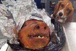 «Самая счастливая в мире собака» насмешила пользователей сети