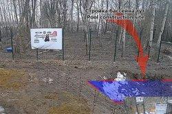 Российский медведь-стример собрал полмиллиона рублей на бассейн