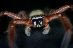 В Австралии придумали Shazam для пауков и змей