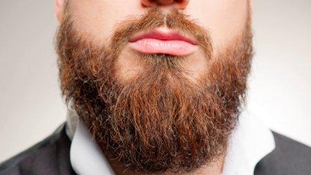 Как выбрать расческу для бороды и усов? Советы профессионалов и опытные модели