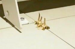 Страшная находка в стене поставила в тупик пользователей TikTok и полицию